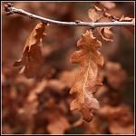 Posledni podzimni