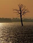 Můj nejoblíbenější pálavský strom :)