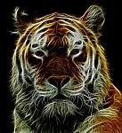 Fractalius - Tygr