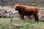 Skotsko :) bigbítovej HÁROŠ bejk :)