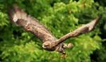 Sokolí letovka