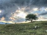 Černohorská