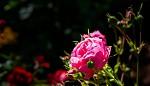 co zahrada dala