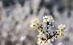 jaro v plném poudu