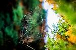 pavouk si hrál