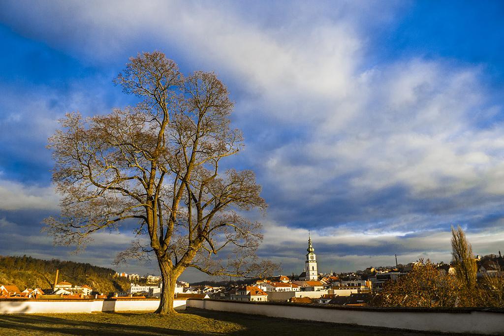 strom nad městem