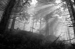 Polední paprsky v mlze