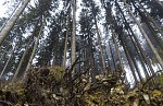 Mystický les