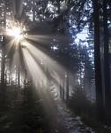 Lesní cestou...