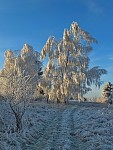 Imitace zimy