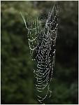Pavoučí bižuterie