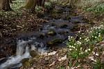 Chlébský potok na jaře