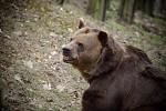 medvěd hnědý... usměvavý