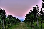 střídání dne a noci na vinici
