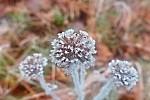 zimní květ....