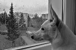 ahááá, tak tohle je to psí počasí ?!