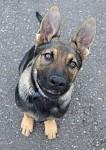 psí pohled:)