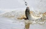 rybaření:) pohoda :) klídeček :)