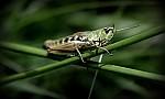 tajuplný svět hmyzu :)