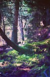 mystic place :D