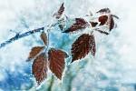 kouzlo zimy :)