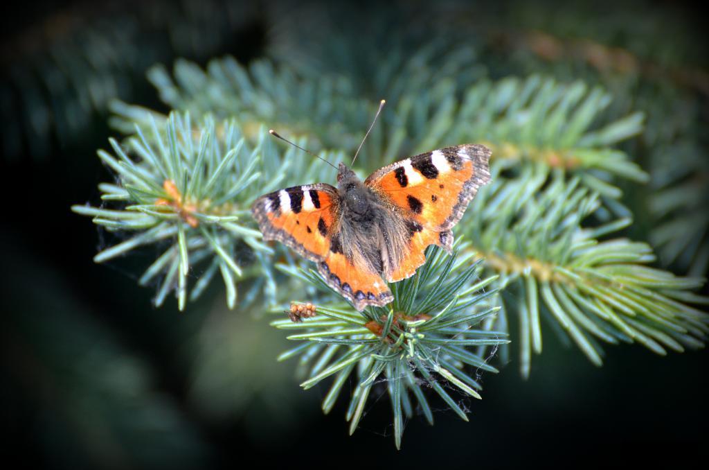 jsem motýl...