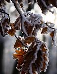 První zimní den