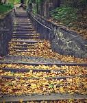 schody2 - Planá