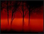 stromy v mlze1