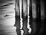 Vodní plot