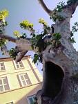 Ve stromě jsem slyšel Funesovu ozvěnu...jj čenická stanice  vykukuje