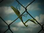 relax na plotě