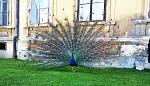 Ošklivej pták a krásná omítka