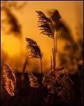 Západ slunce v Bohunicích