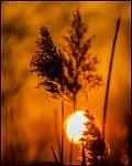 Slunce v trávě