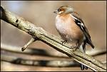 Ptačí krasavice