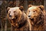 Medvědice s medvídětem