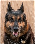 Aran Black Wolf