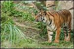 Tygřice na Tygřích skalách