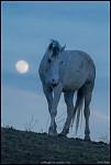 Мěsíční kůň