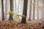 Lesní mládě