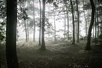 Mlha přede mnou...mlha za mnou...
