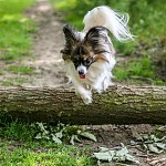 Hop a skok