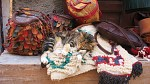 Marocká kočka