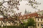magnolie a hrad