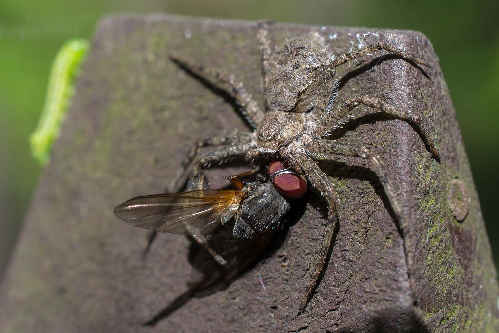 pavouk a půl mouchy