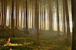na skok v lese