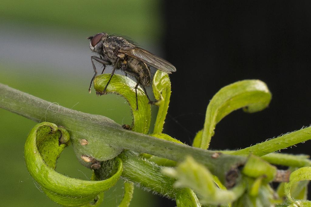 pózující moucha