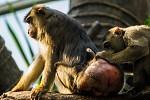 neděle v zoo