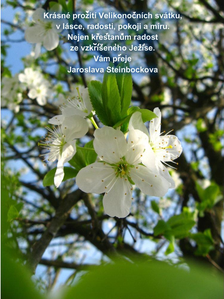 přání k velikonocům obrázky Přání k Velikonocům   Fotogalerie Digimanie přání k velikonocům obrázky